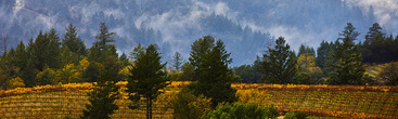 WebPageBanner--Vineyards around Geyserville