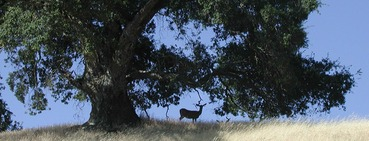 deer-LakeSonoma